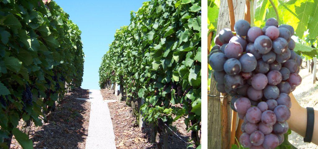 winnice Istria co zobaczyć