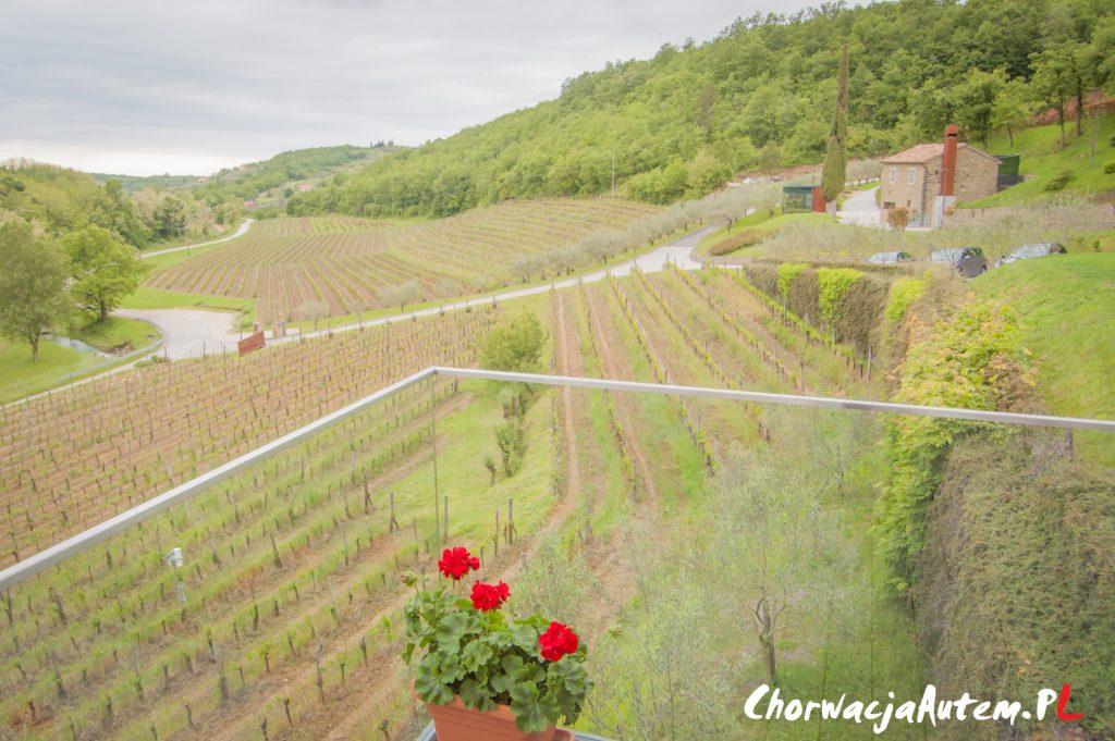 Istria winnica