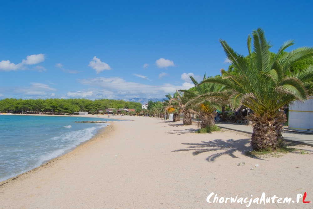 plaża Povljana, fajne plaże, palmy