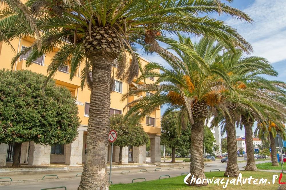 Zadar palmy