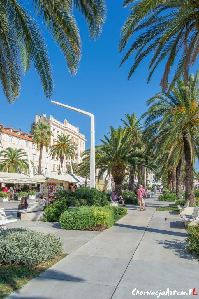 palmowa promenada Riva w Splicie